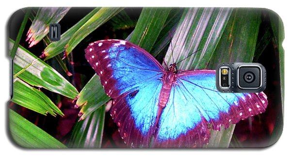 Blue Butterfly Galaxy S5 Case