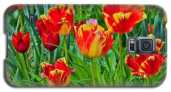 2015 Acewood Tulips 6 Galaxy S5 Case