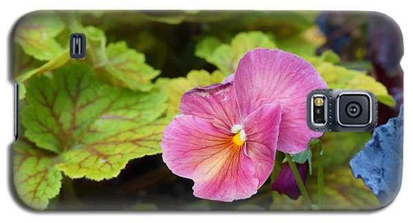 2015 After The Frost At The Garden Pansies 3 Galaxy S5 Case