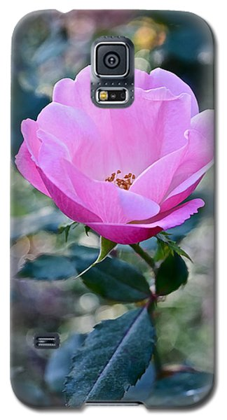 2015 After The Frost At The Garden Pink  Rose Galaxy S5 Case