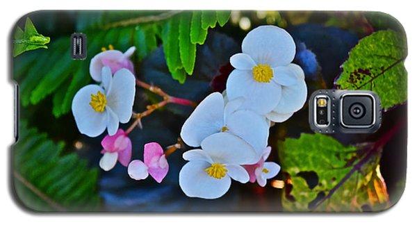 2015 Early September At The Garden Begonias Galaxy S5 Case