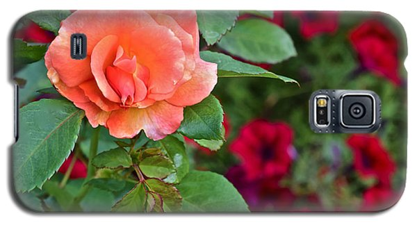 2015 Fall Equinox At The Garden Sunset Rose And Petunias Galaxy S5 Case