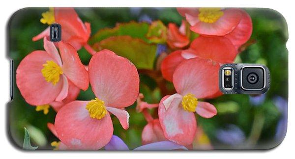 2015 Mid September At The Garden Begonias 2 Galaxy S5 Case