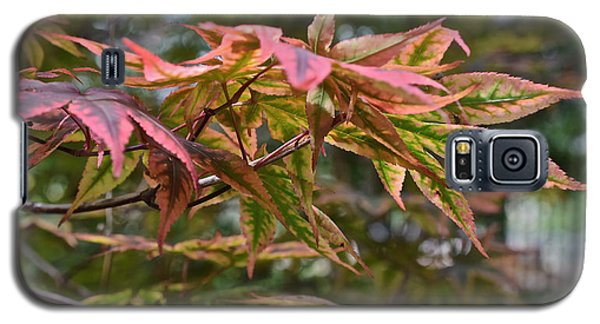2015 Mid-september At The Garden Japanese Maple 1 Galaxy S5 Case