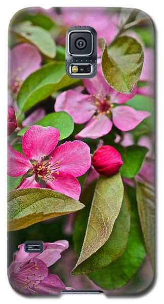 2015 Spring At The Gardens Pink Crabapple Blossoms 2 Galaxy S5 Case