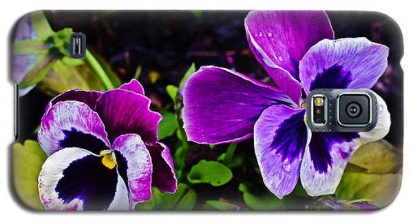 2015 Spring At Olbrich Gardens Violet Pansies Galaxy S5 Case