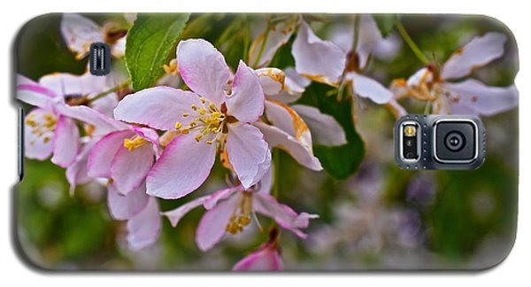 2015 Spring At The Gardens White Crabapple Blossoms 1 Galaxy S5 Case