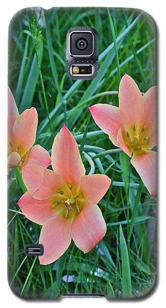 2015 Spring At The Gardens Meadow Garden Tulips 3 Galaxy S5 Case