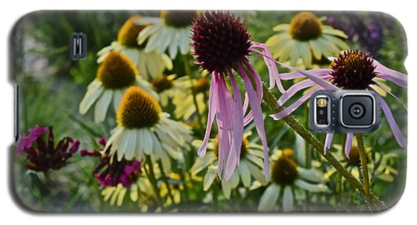 2015 Summer At The Garden Coneflowers Galaxy S5 Case