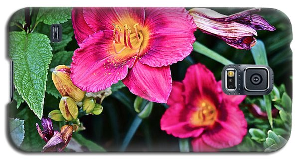 2015 Summer At The Garden Strawberry Candy Daylily 2 Galaxy S5 Case