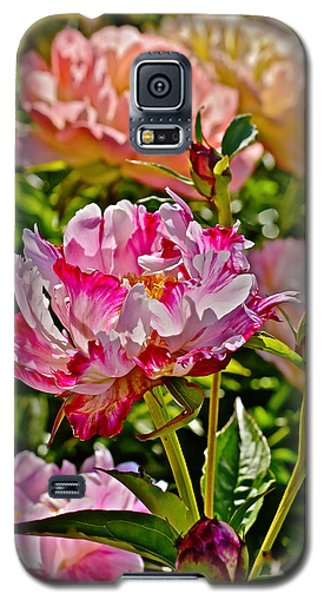 2015 Summer's Eve At The Garden Candy Stripe Peony Galaxy S5 Case