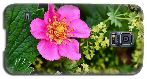 2015 Summer's Eve At The Garden Lipstick Strawberry Galaxy S5 Case