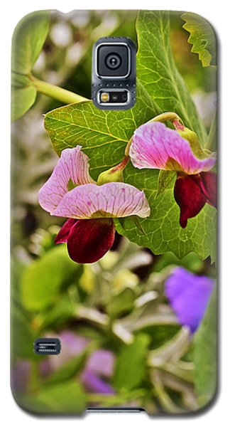 2015 Summer's Eve At The Garden Sweet Pea 2 Galaxy S5 Case