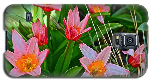 2016 Acewood Tulips 2 Galaxy S5 Case