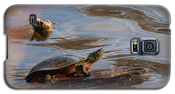 2017 Painted Turtle Galaxy S5 Case