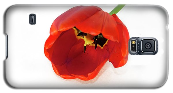 Red Tulip Galaxy S5 Case by Elvira Ladocki