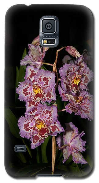 Cattleya Style Orchids Galaxy S5 Case