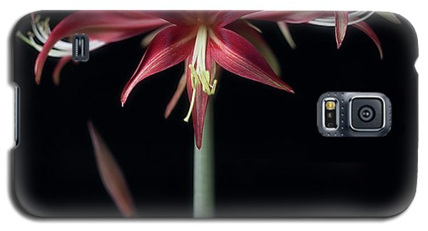 Amaryllis 'quito' Galaxy S5 Case