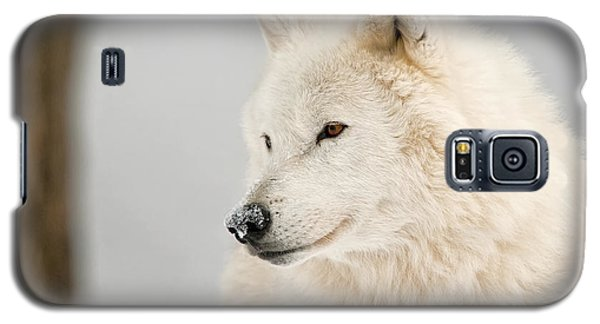 Arctic Wolf Portrait Galaxy S5 Case