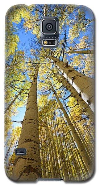 Aspens In The Fall Galaxy S5 Case