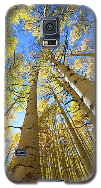 Aspens In The Fall Galaxy S5 Case