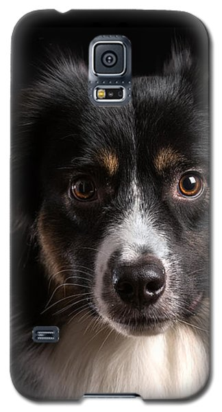 Australian Shepherd Galaxy S5 Case by Verena Matthew