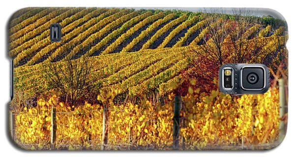 Galaxy S5 Case featuring the photograph Autumn Vines by Bill Robinson