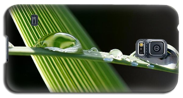 Big Rain Drops On Leaf Galaxy S5 Case by Werner Lehmann