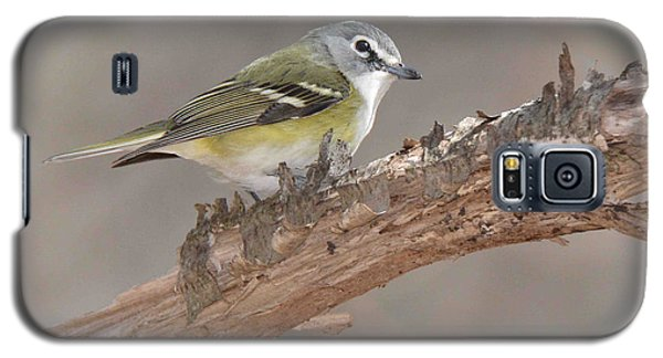 Blue-headed Vireo Galaxy S5 Case by Alan Lenk