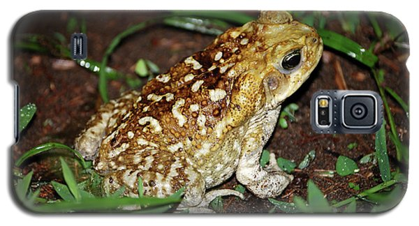 Cane Toad Galaxy S5 Case by Breck Bartholomew