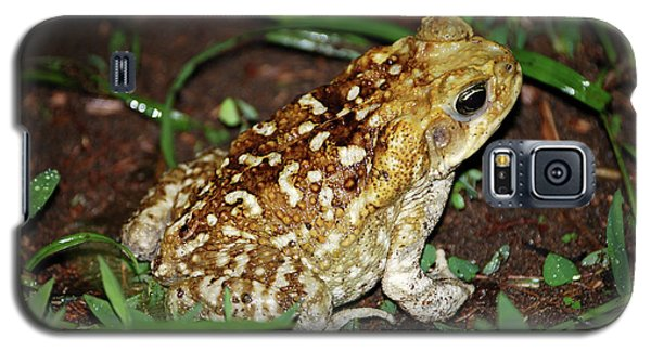 Cane Toad Galaxy S5 Case