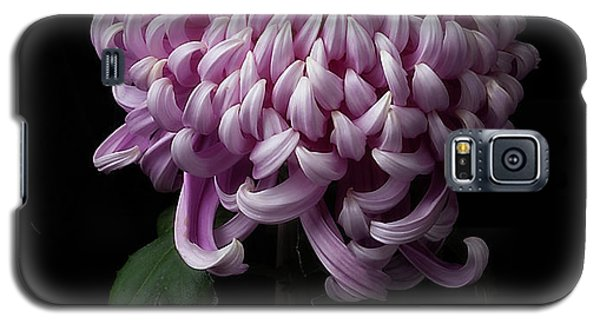 Chrysanthemum 'jefferson Park' Galaxy S5 Case