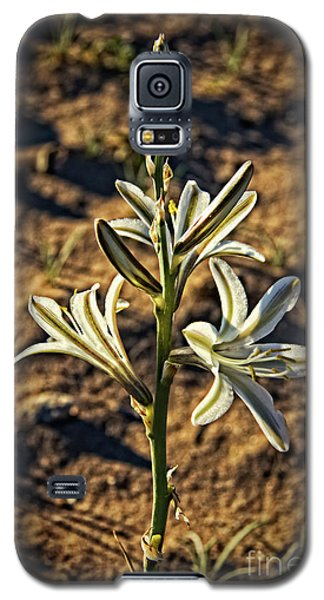 Galaxy S5 Case featuring the photograph Desert Lily by Robert Bales
