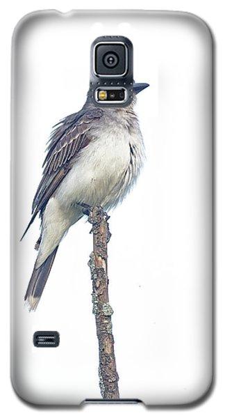 Eastern Kingbird Galaxy S5 Case
