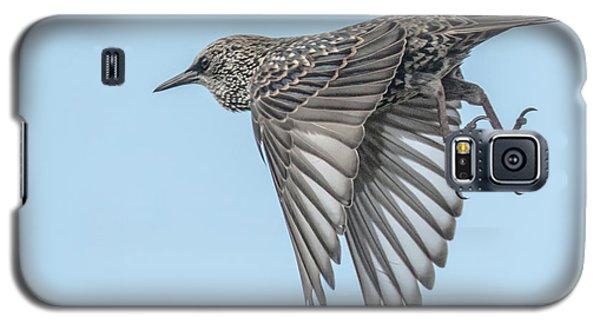 European Starling Galaxy S5 Case by Tam Ryan