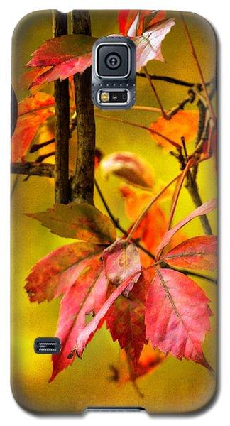 Fall Colors Galaxy S5 Case by Eduard Moldoveanu
