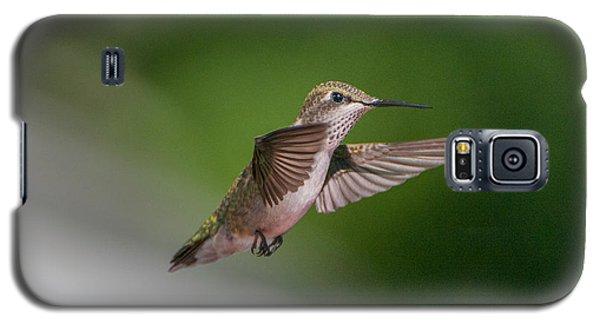 Female Ruby Throated Hummingbird Galaxy S5 Case