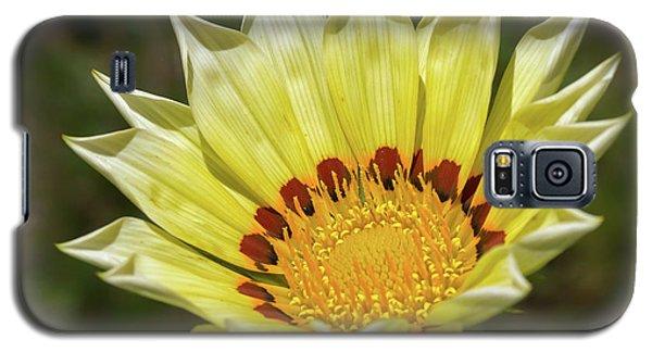 Gazania Petals Galaxy S5 Case