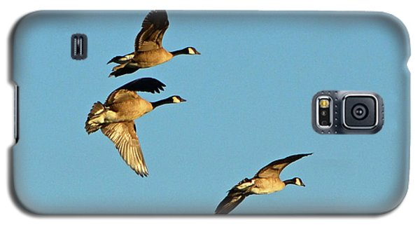 3 Geese In Flight Galaxy S5 Case