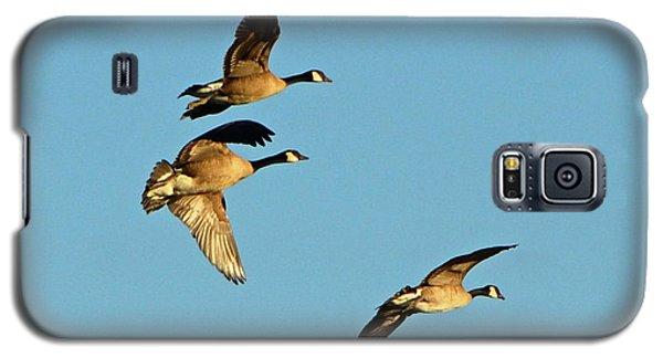 3 Geese In Flight Galaxy S5 Case