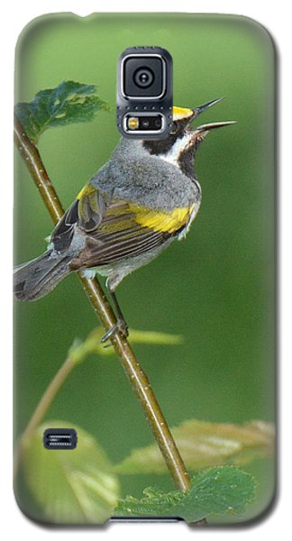 Golden-winged Warbler Galaxy S5 Case by Alan Lenk