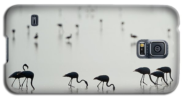 Flamingo Galaxy S5 Case - Greater Flamingos Phoenicopterus Roseus by Panoramic Images