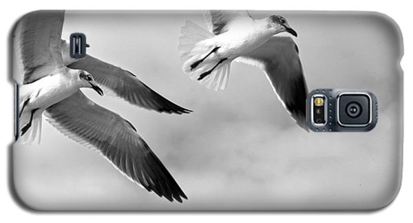 3 Gulls Galaxy S5 Case