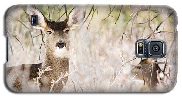 Herd Of Mule Deer In Deep Snow Galaxy S5 Case