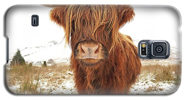 Cow Galaxy S5 Case - Highland Cow by Grant Glendinning