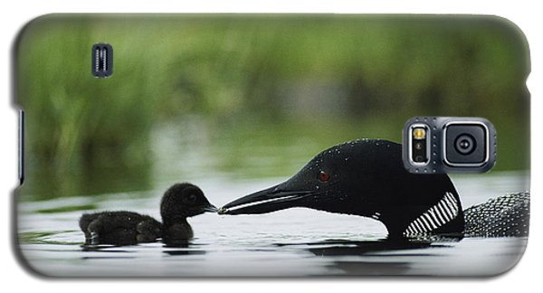 Loon Galaxy S5 Case - Loons by Michael S Quinton