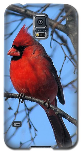 Northern Cardinal Galaxy S5 Case by Ricky L Jones