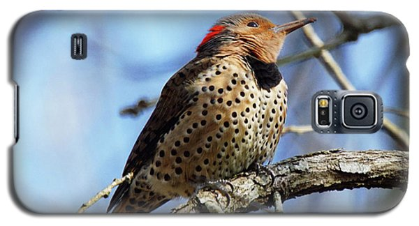 Northern Flicker Woodpecker Galaxy S5 Case