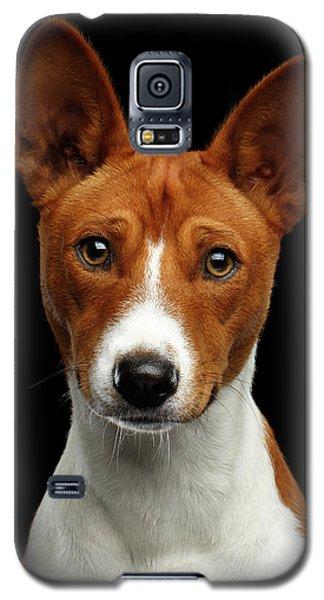 Pedigree White With Red Basenji Dog On Isolated Black Background Galaxy S5 Case by Sergey Taran