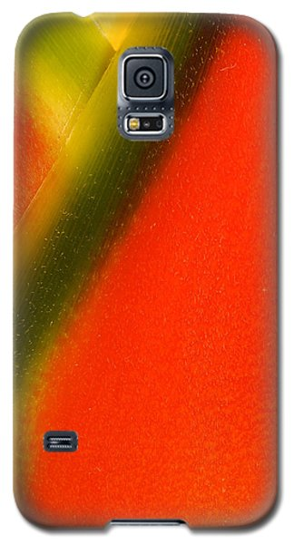 Photograph Of A Lobster Claws Heliconia Galaxy S5 Case by Perla Copernik